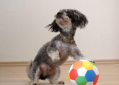 Spielst Du mit mir Fußball?